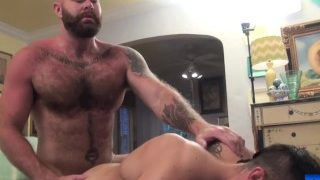 Stud bred by hot daddy bear